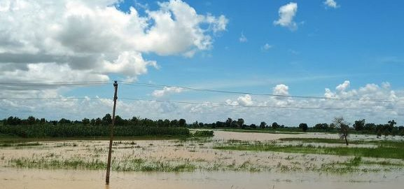 Kebbi flooded rice plains