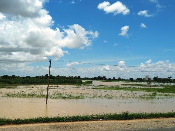 Kebbi flooded rice plains
